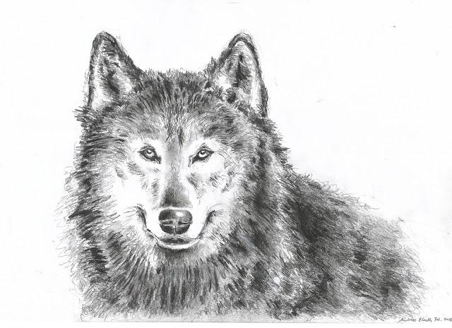 drawing wolf wolfszeichnung