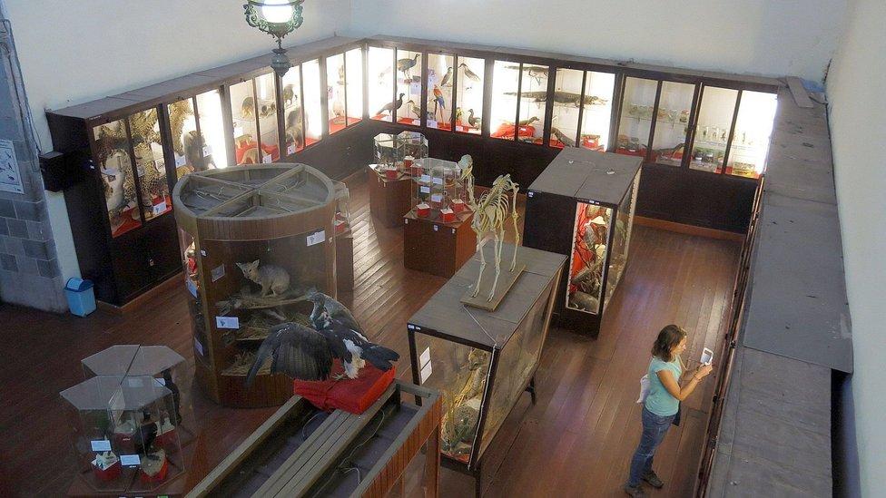 Resultado de imagen para museo de historia natural cusco