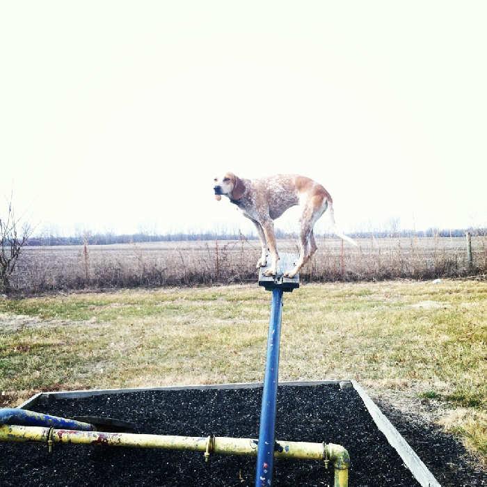 Послушная собака 4