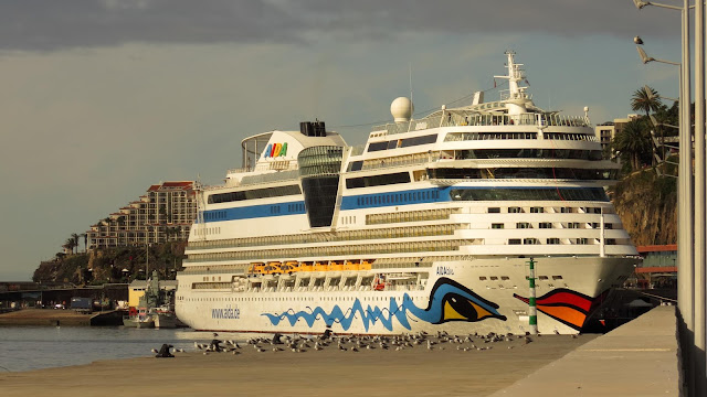 seagulls and the cruise ship