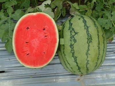كيف تصبح ماهرا باكتشاف البطيخة الحمراء والحلوة كالسكر والطازجة كي تطفئ عطشك في الصيف وفي رمضان !!