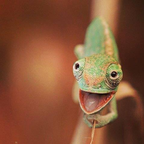 Cute Reptiles, beautiful