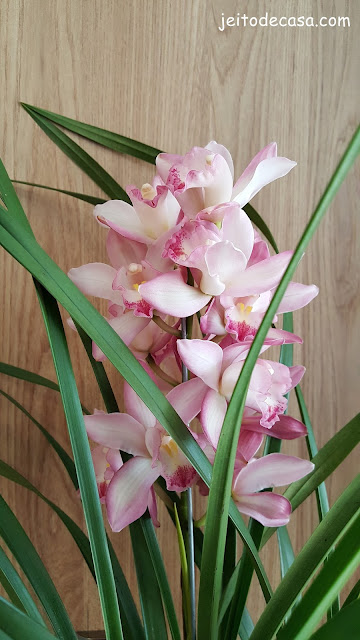 orquidea-na -decor