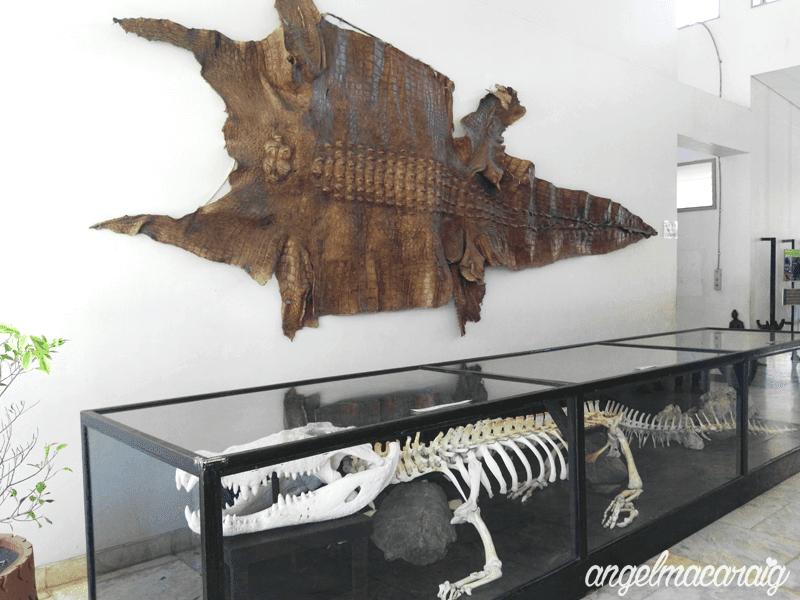 Rio's Skin and Skeleton