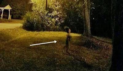 Sosok Misterius Tertangkap Foto di Kebun Malam Hari