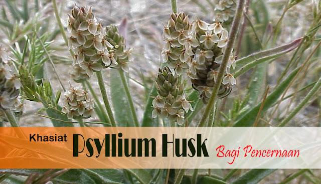 Khasiat Psyllium Husk Bagi Pencernaan