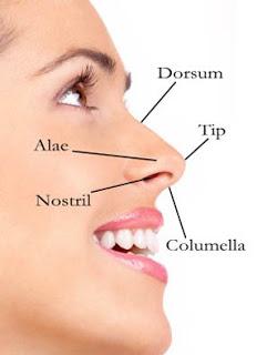 Hidung Manusia (Pengertian, Bagian dan Fungsinya, Penyakit)