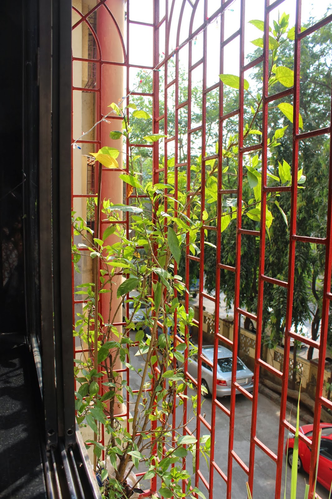 Balcony Window Grill Design: AnnaParabrahma: The Green Balcony Is Back As The Window