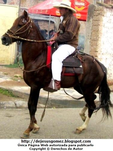 Caballo con un hombre montado sobre él. Foto de un caballo de Jesus Gómez