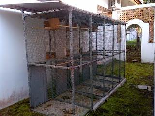 Burung Cucak Rowo - Kontuksi dan Bentuk Bangunan Untuk Membuat Kandang Penangkaran Burung Cucak Rowo - Penangkaran Burung Cucak Rowo
