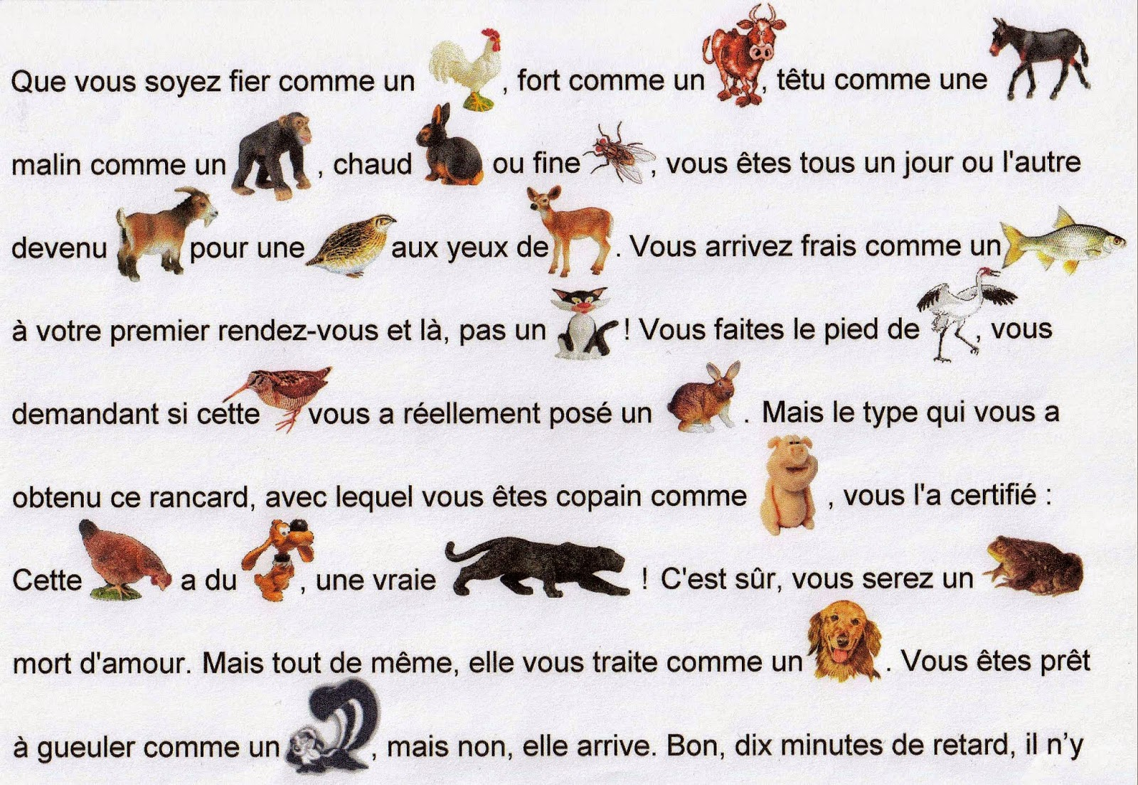 Chat Traduction Dictionnaire Des Animaux Bv75 Jornalagora