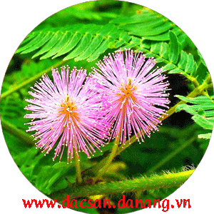 phan hoa
