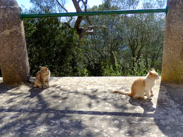cats mallorca