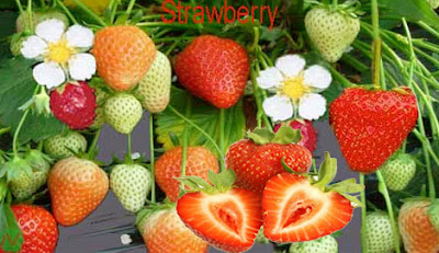 Strawberry, strawberry fruit
