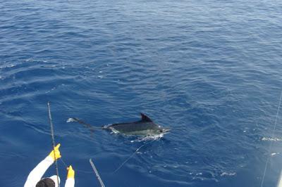 GARDNER TACKLE SURE SHOCK LEADER CLEAR YELLOW NEON 50LB 80LB SEA FISHING