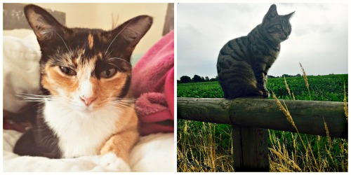Cats - Tortoiseshell and tabby cats