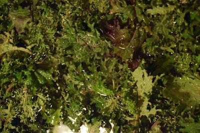 Brassica napus 'Red Russian'