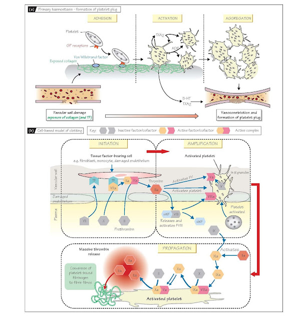 Platelets And Haemostasis