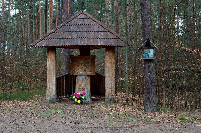 ścieżka edukacyjna,Maziarnia,Zalesie,Stany,gmina Bojanów,Puszcza Sandomierska,lasy
