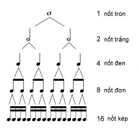 Kiến Thức Nhạc Lý Cơ Bản Cần Có Cho Người Tự Học Đàn Piano Tại Nhà