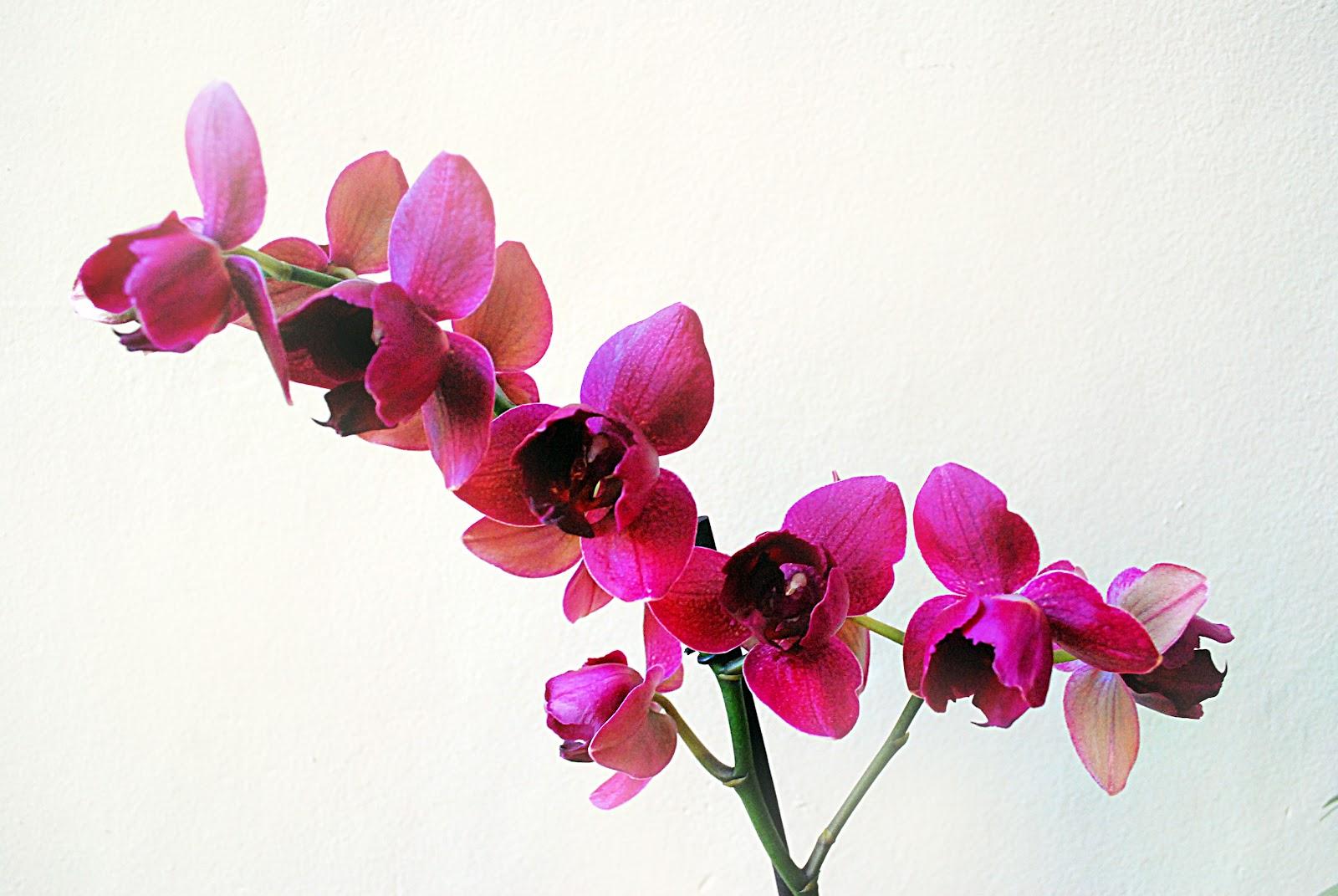 7 Kwiatów Pielęgnacja Storczyka To Naprawdę łatwe