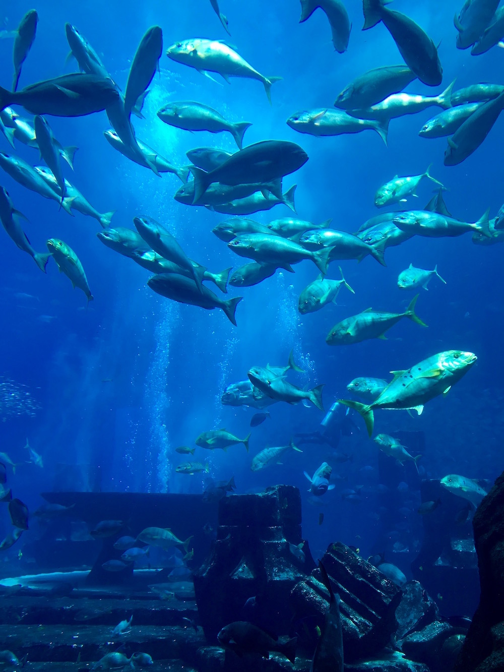 atlantis the palm dubai aquarium