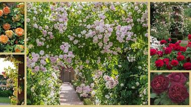 Una de Instagram: inspiración, jardín y rosas con David Austin Roses