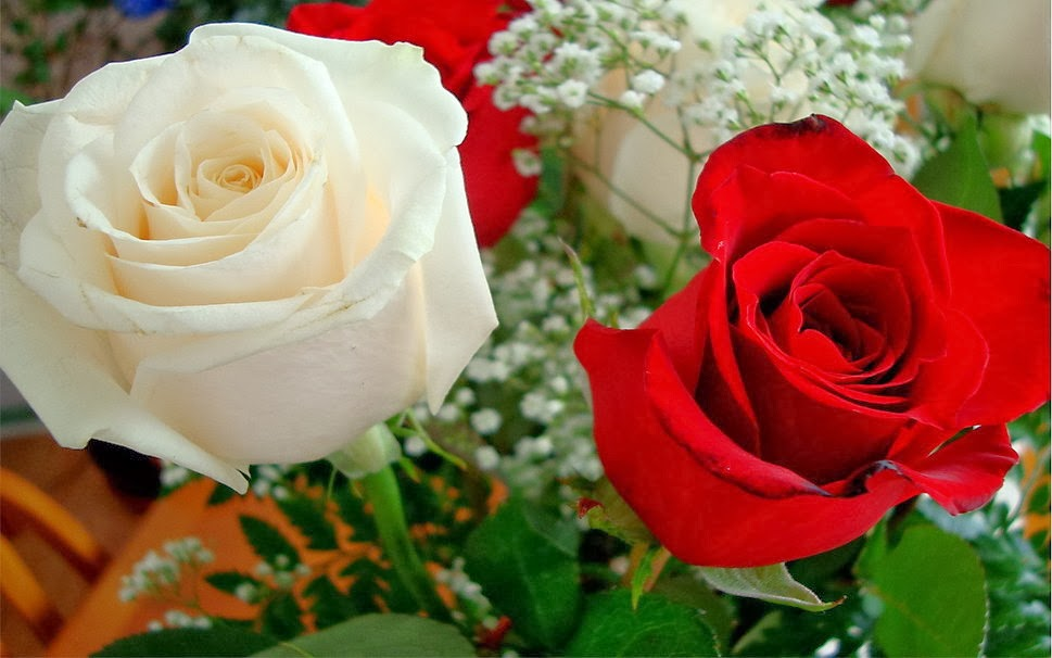 Red And White Roses Wallpaper Puspa Wallpapers