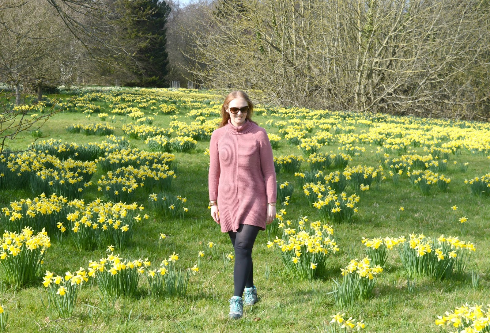 Howick Hall, Northumberland - Daffodil Carpet