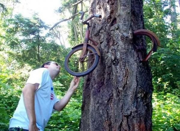 أشجار تبتلع كل ما يعترض نموها 2-600x438.jpg