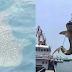 Hiu Paus Berenang Di Lepas Pantai Cina, Akan Disembelih Dan Digantung