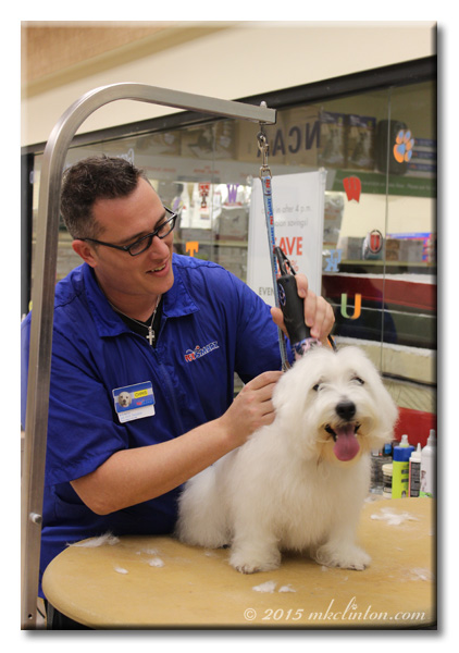 Dog groomer shaving Pierre the Westie