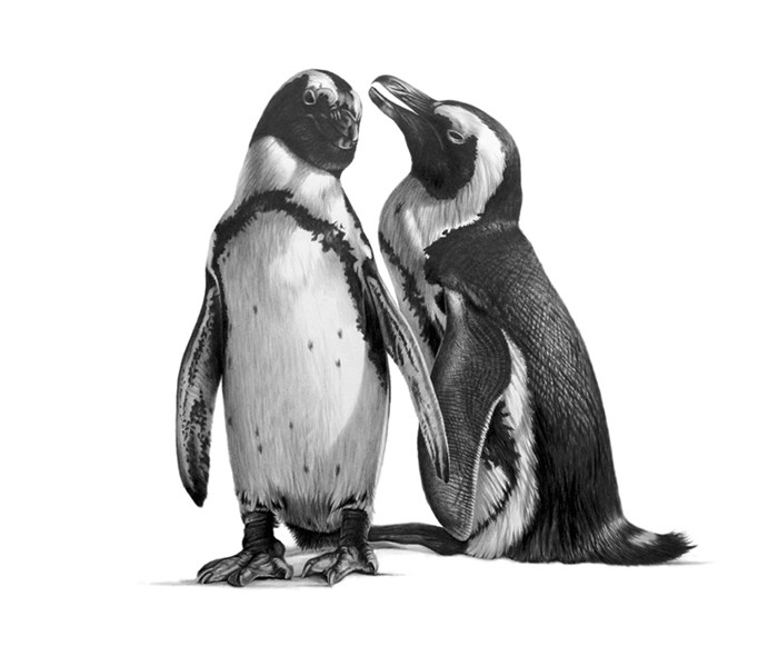 07-Penguins-Pencil-Richard-Symonds-Wildlife-Fine-Art-Drawings-a-Painting-and-a-Video-www-designstack-co