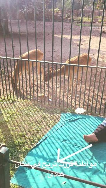 إقفلوا حديقة الحيوان في الجيزة بسرعة!!! 26731556_1600141000065973_793521332070556749_n
