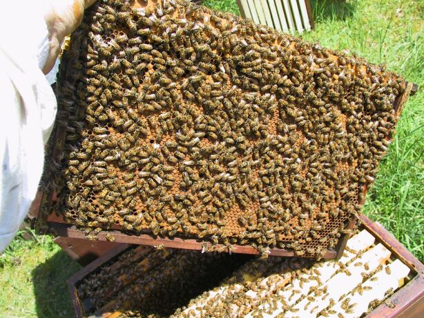 Honey Bee Queens: Evaluating the Most Important Colony Member