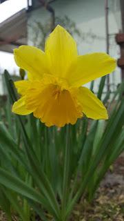 3/2019  To już kwiecień… wiosna w pełni…
