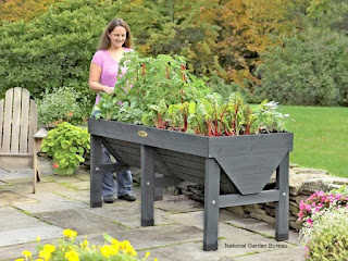 3 Easy Tips for Successful Container Gardening