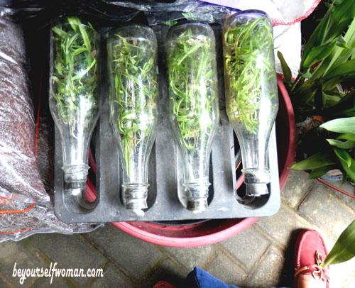 pasar tanaman PASTY Jogja