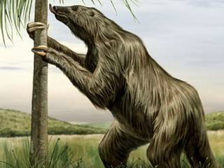 """Resultado de imagem para preguiça gigante"""""""