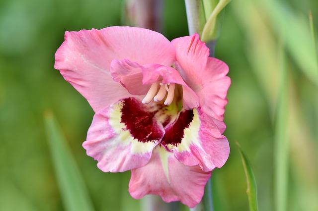 hoa dơn đẹp nhất 12