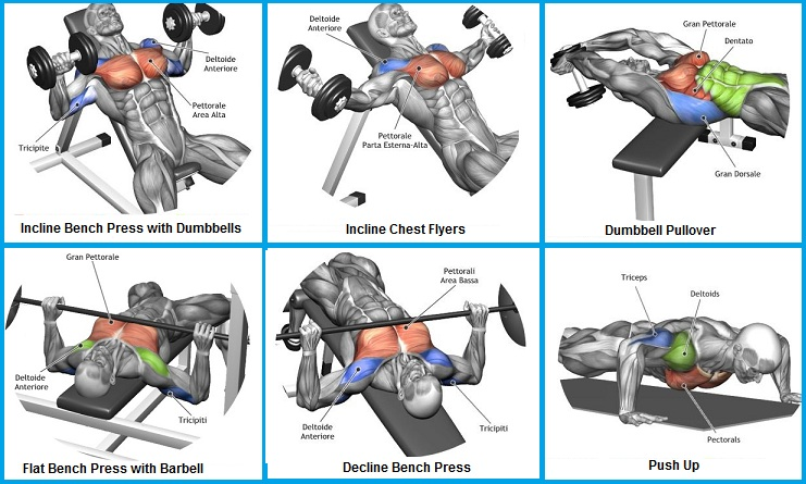 Top 6 Exercises to Build Chest Muscles So Cool Bodydulding