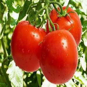 Kırmızı Yiyeceklerin Faydaları