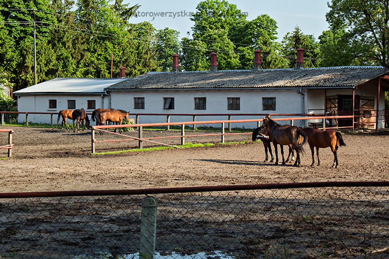 stadnina koni