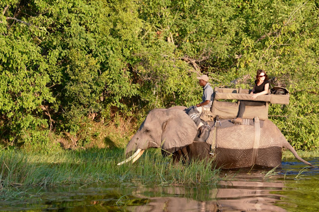Wilderness Safari's, olifant, elephant, Botswana, Okavango Delta, Abu Camp, Randall Moore, passion for elephants
