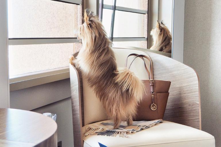 Décoration de la chambre de l'hôtel du Radisson Blu Lyon - chiens acceptés