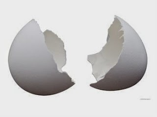 Como a Galinha Forma a Casca Mineralizada do Ovo em Tempo Tão Curto?