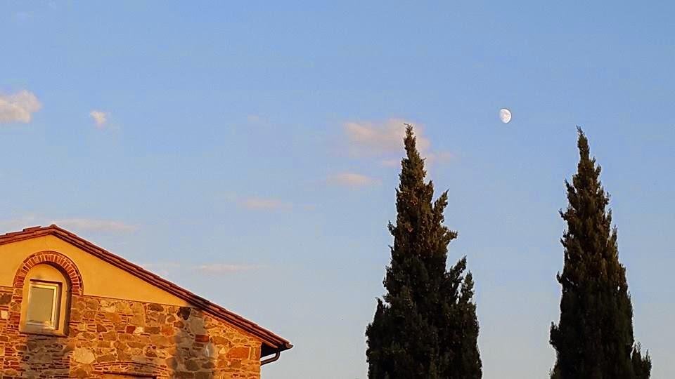 tuscany cipress