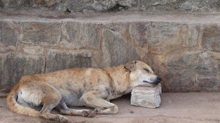Stray dog lying on concrete ground, sleeping with head pillowed on square-cut rock