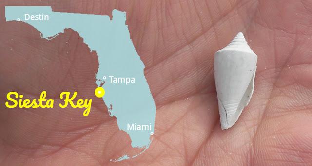 Siesta Key in Muschelstrände Florida's, Florida USA