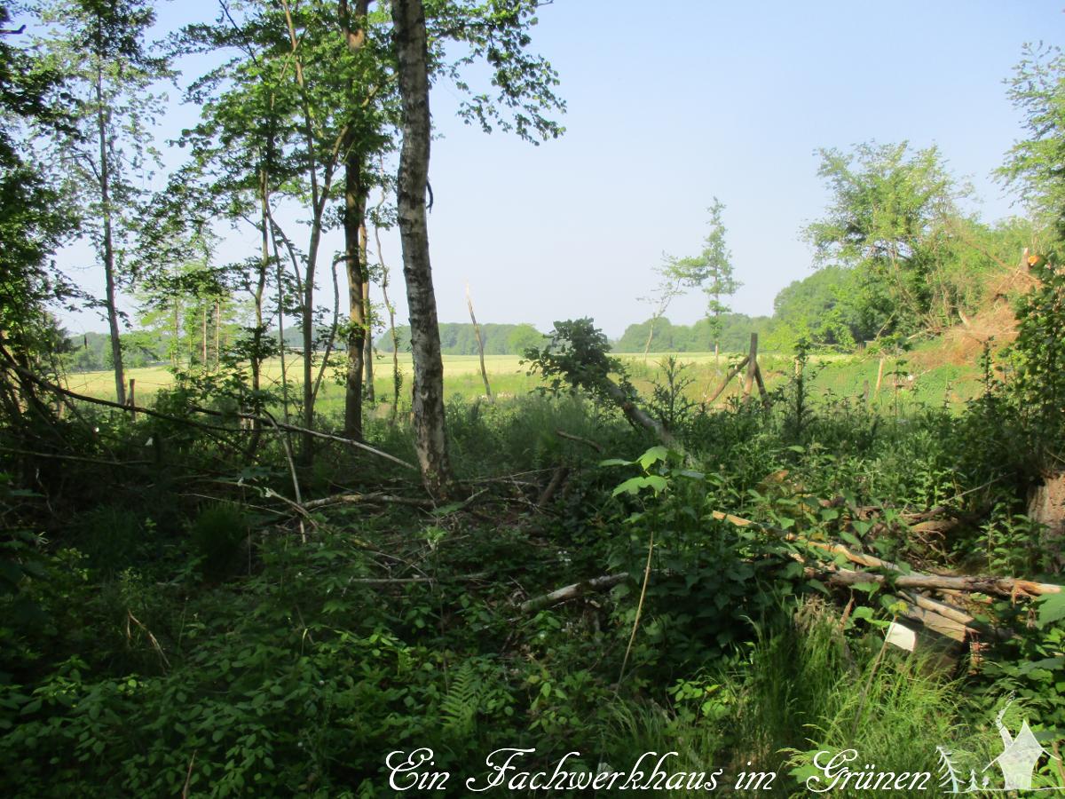 Naturschutz, Biotop, Lebensgemeinschaft, Mückensee